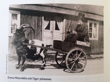 Tiger-Johannes
