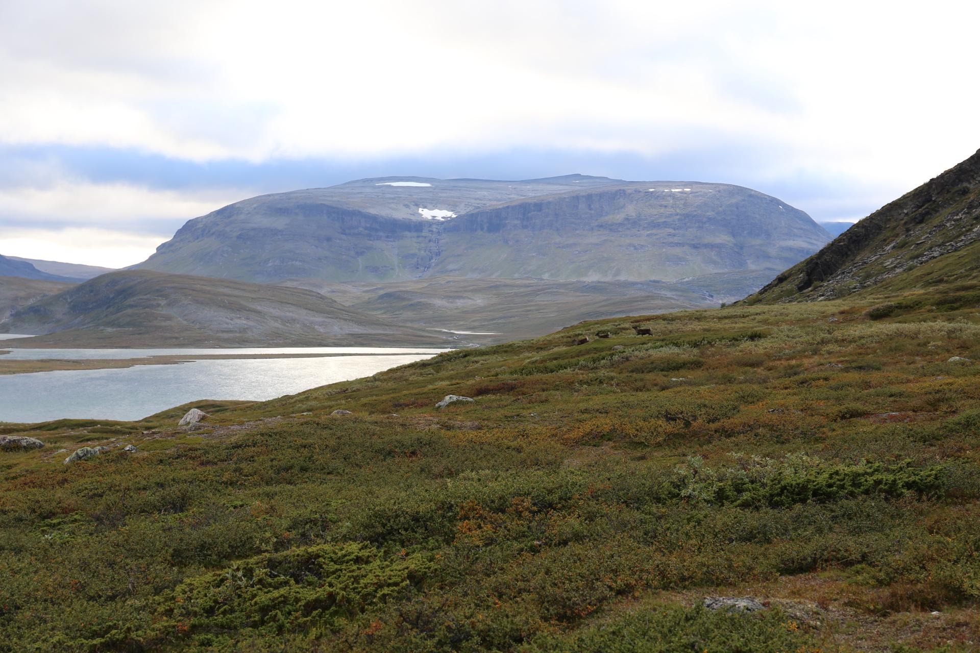 """""""Björnar"""" med horn på Blåfjellet"""