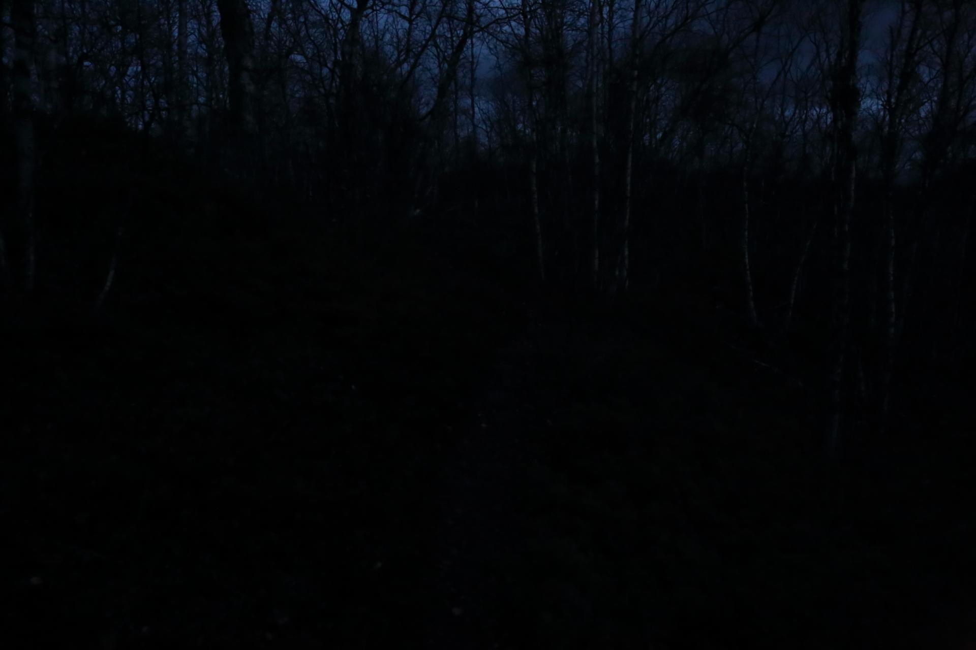 Ute ur skogen i grevens tid
