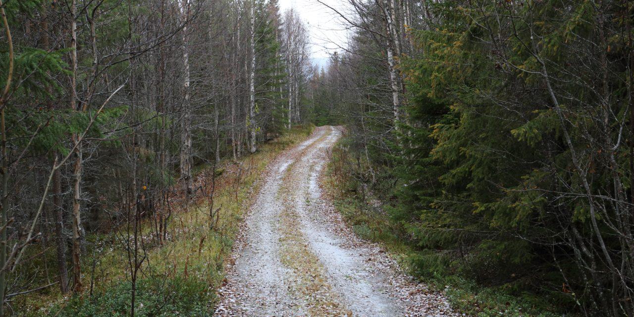 Dag 65: Från fjäll och myr till skog och sjö