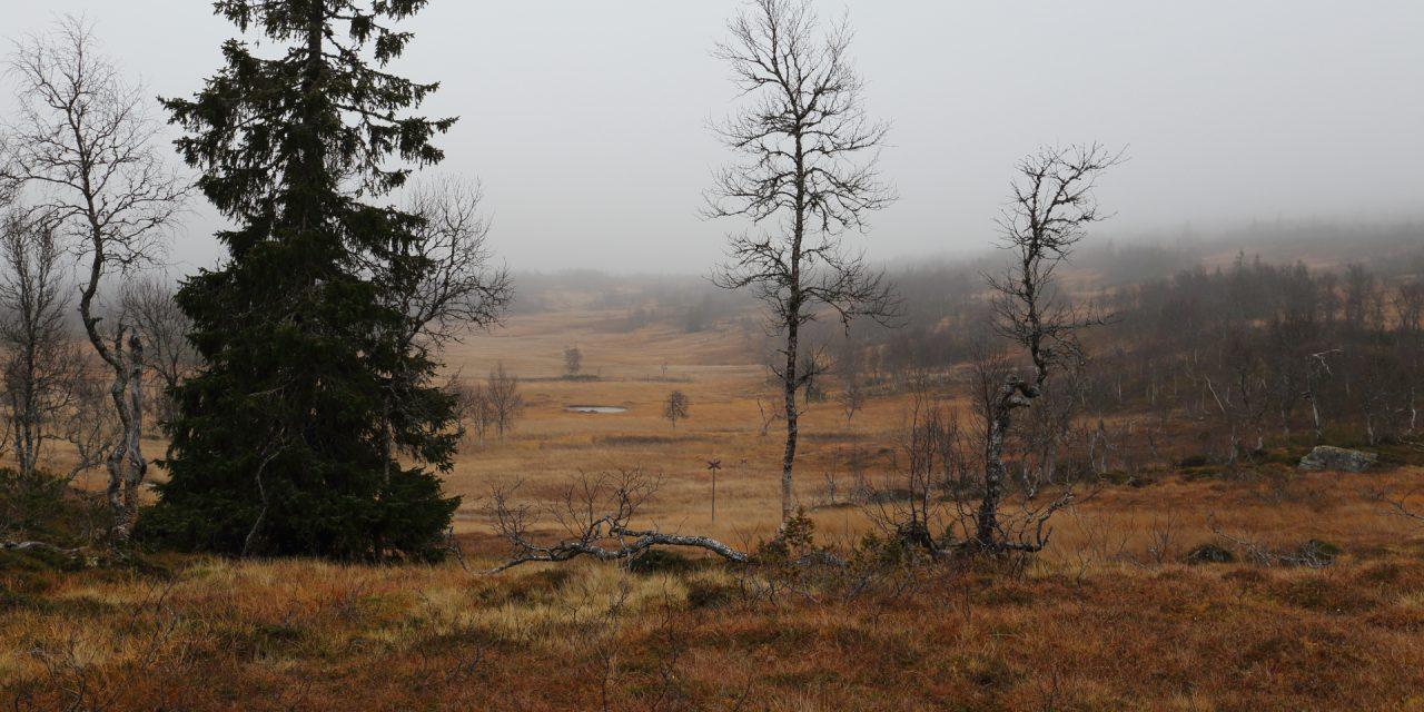 Dag 61: Jämtlands blöta myrar