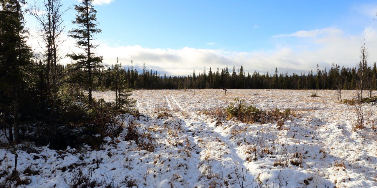 Dag 71: Snön som kom och försvann