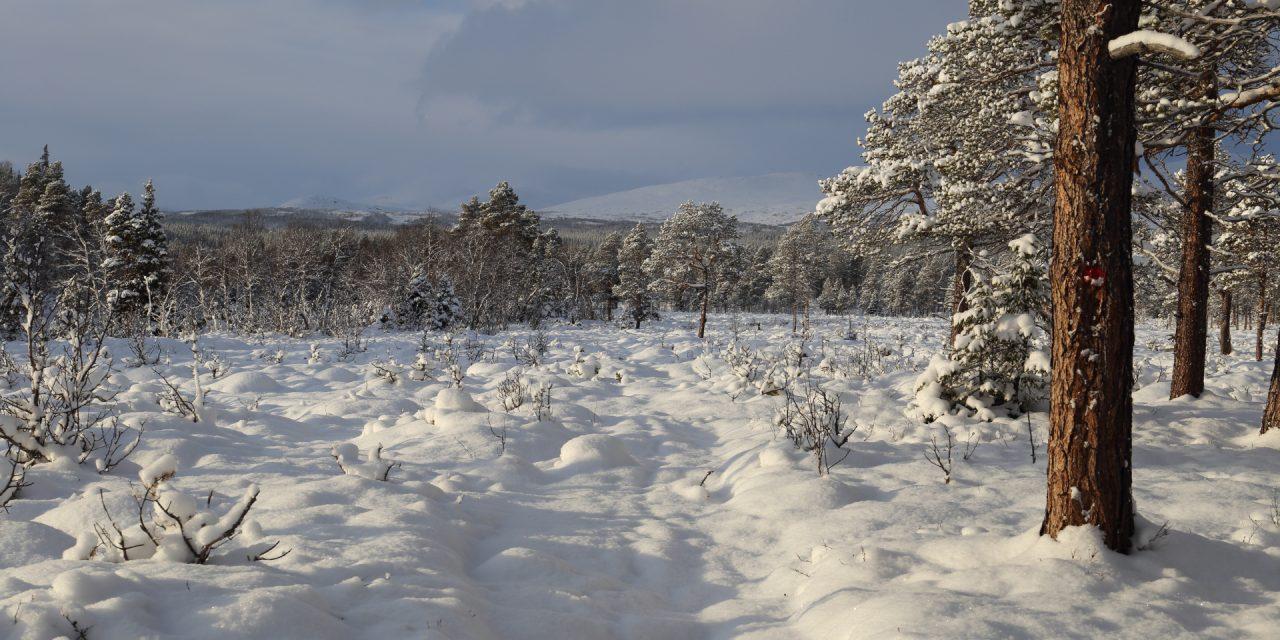 Dag 83: Snön vid foten av Smällhögarna